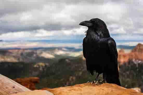 sugerencias para escribir de Allan Poe